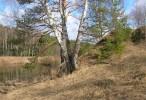 Купить земельный участок в Ярославской области.